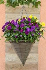 Hornveilchenblühen lila und gelb in dekorativer spitzer Blumenampel