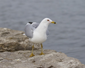 Funny picture with the serious gull near the water