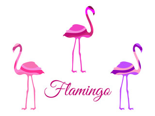 Flamingo. Flamingo isolated. Set of vector illustrations.