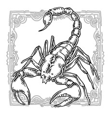 Scorpion, Zodiac illustration.