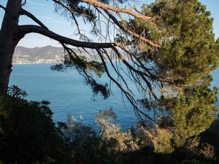 Alberi a picco sul mare