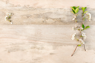 white cherry blossoms on wooden table. Empty space for text.