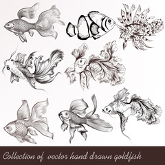 Vector set of filigree drawn goldfish in vintage style