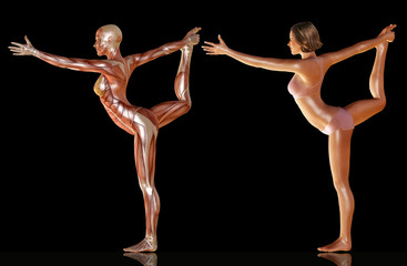 3d render of woman body with muscle anatomy doing yoga