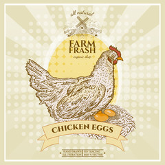 Farm fresh chicken eggs poster design, hen in nest with eggs
