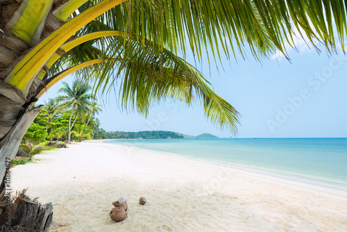 Wall mural Beautiful Exotic beach with coconut palm