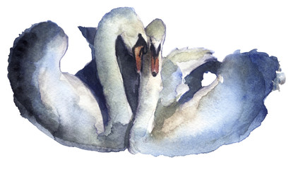 watercolor sketch of swans on the white background