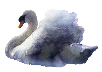 watercolor sketch of a swan on a white background