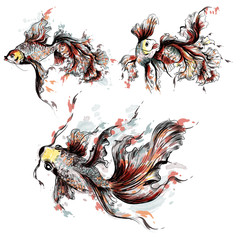 Vector hand drawn goldfish in watercolor style painted by spots