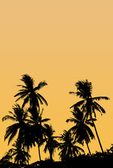 A group of high Quality silhouettes of tropical beach palms Coco
