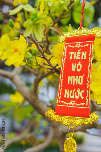 """""""the flowers of traditional Vietnamese new year"""" Stock ..."""