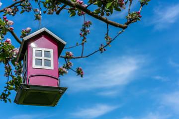 Bird feeder house in blooming flowering apple tree, blue sky springtime.