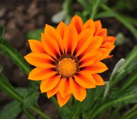Orange flowers in the park
