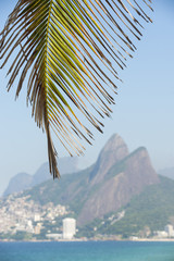 Close-up of palm tree against a bright background of Ipanema Beach and the Rio de Janeiro, Brazil skyline with Two Brothers Dois Irmaos Mountain