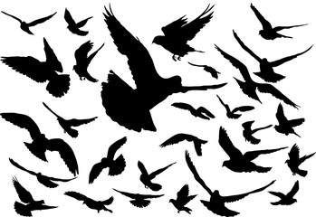 Vector set of silhouettes of 28 flying birds