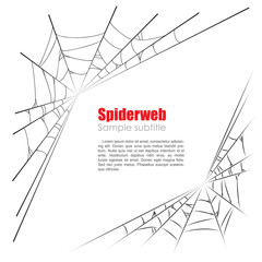 Spider web vector illustration on white background