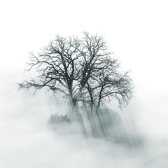 Lone Tree silhouette in foggy morning