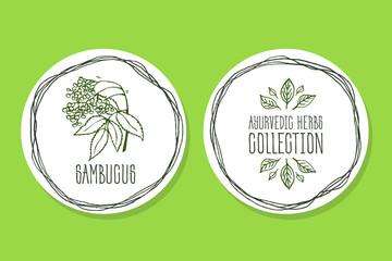 Ayurvedic Herb - Product Label with Sambucus