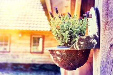 Home decoration with lavender flower pot