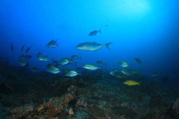 Fish and coral reef underwater in Indian Ocean, Thailand