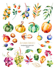 Bright collection with fall leaves,branches,berry,blackberry,mushroom,pumpkins, walnut,grapes vine,prunes and more.Colorful autumn harvest collection with 31 watercolor elements.For your unique create