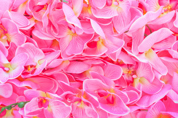 dense background of red orchid