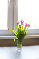 Tulips and gift on a gray background