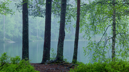 Lake in the forest. Light rain. Nordic springtime. 3