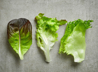 various kinds of lettuce