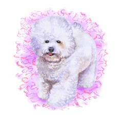 Watercolor closeup portrait of french bichon frise dog isolated on pink background. fluffy toy dog. Hand drawn sweet home pet. Popular small breed dog. Greeting card design. Clip art illustration