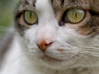 Cat's eye - veterinary etc.