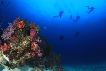 Scuba divers swim over coral reef