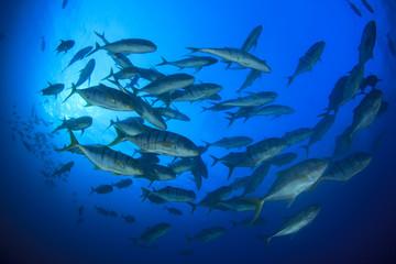 Fish in ocean