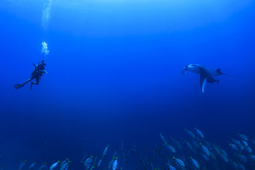 Scuba diver and manta ray