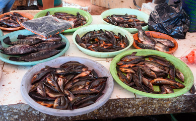 Counter with small fish on Tomohon Traditional Market