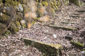 stone stairs pathway in garden