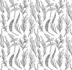 Vector seamless pattern with hand drawn herbs