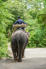 A man riding on elephant trekking adventure into the jungle