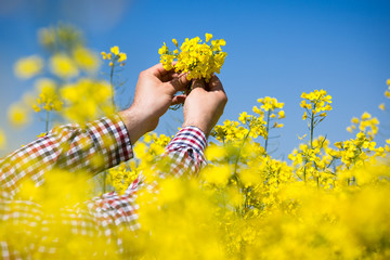 Farmer checking the quality of rapeseed