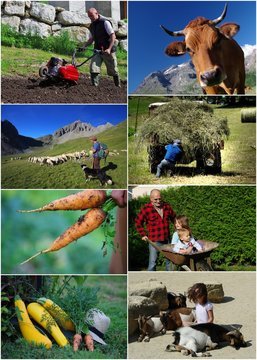 monde agricole - montage