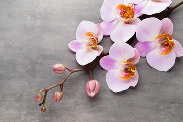 Fototapeta Spa orchid theme objects on grey background. obraz