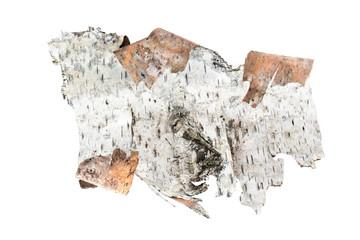 A piece of birch bark