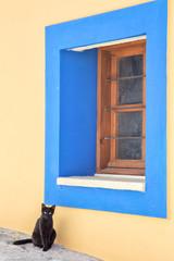 Кошка сидит около синего окна.