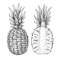 Vector hand drawn pineapple and sliced pieces set. Tropical summ