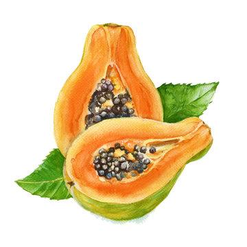 Papaya fruit. watercolor illustration. isolated.