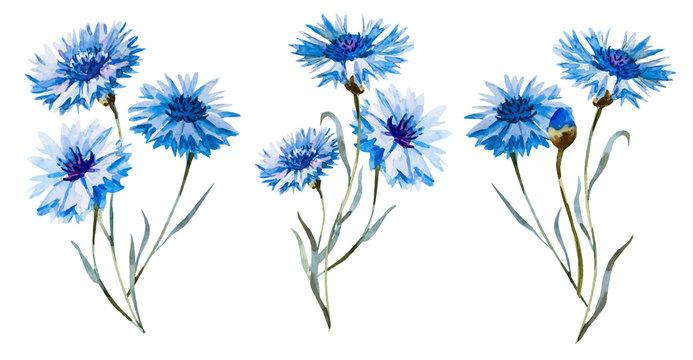 Cornflower watercolor set