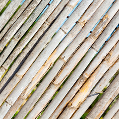 texture bamboo wood and plant in the abstract background