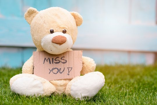 Teddy bear holding cardboard with information Miss You