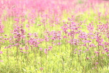 photo of spring meadow with pink wildflowers, selective focus