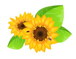 Sunflowers decoration with ladybugs